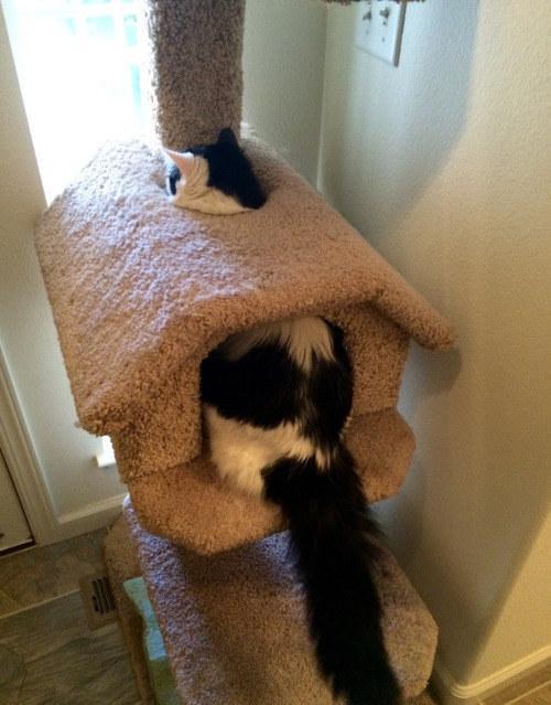 スッポリ猫。