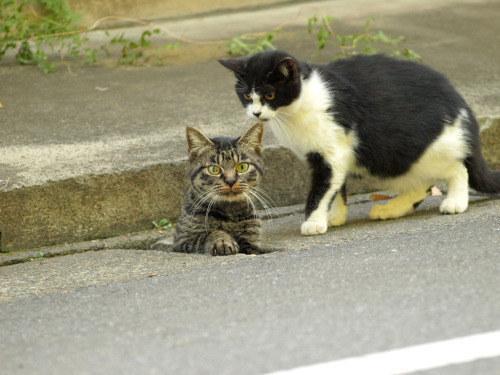 へんな場所から出現する猫!