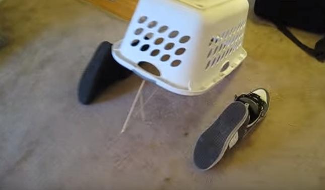 カリカリを餌に罠を設置。