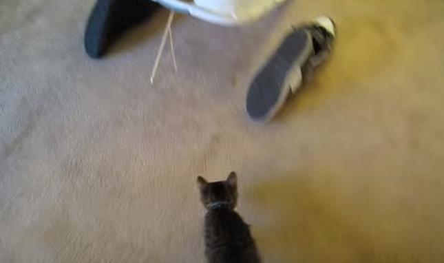 猫登場!カリカリに食いついてる!
