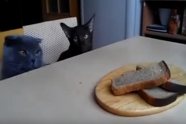 悪い顔でパンを狙う2匹。