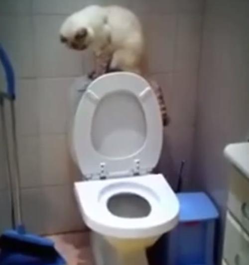 しっかりと流す猫!!