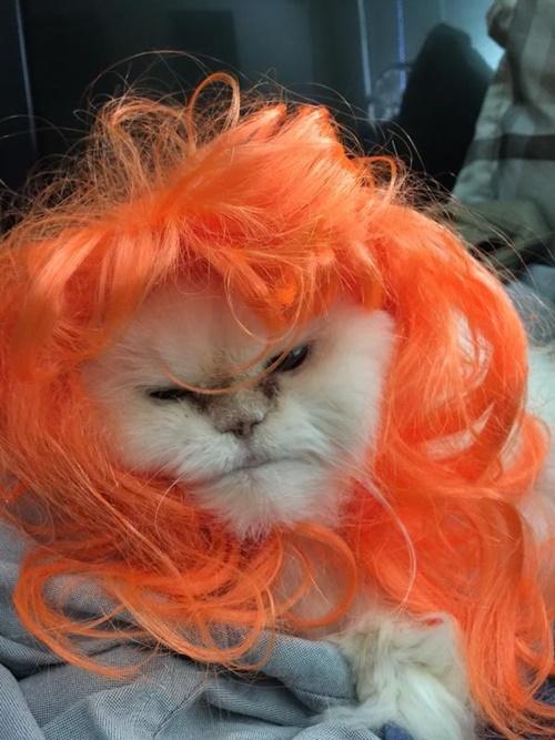 オレンジヘアー!!