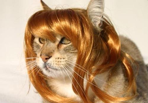 お嬢様猫。