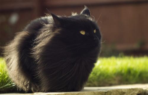 黒い弾丸と化す猫。
