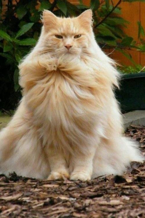 風のドレスをまとった猫。