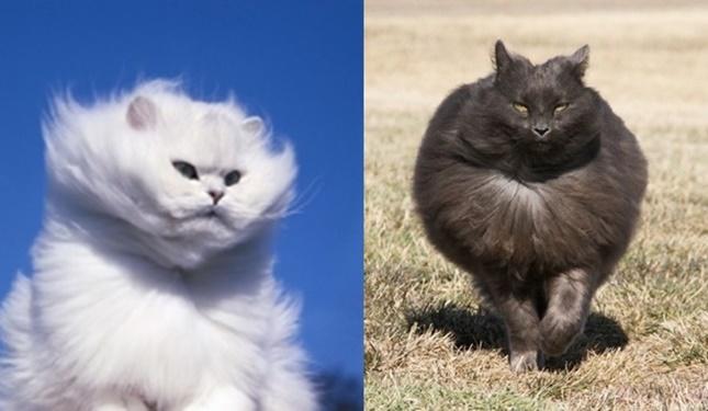 強風を浴びる猫達。