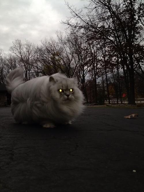 猫バス!?