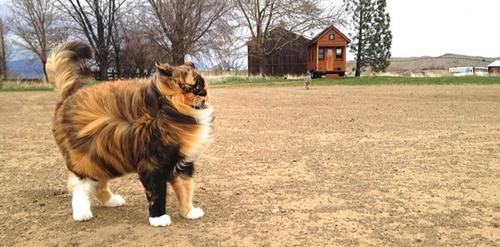 強風にも耐える凛々しさ。