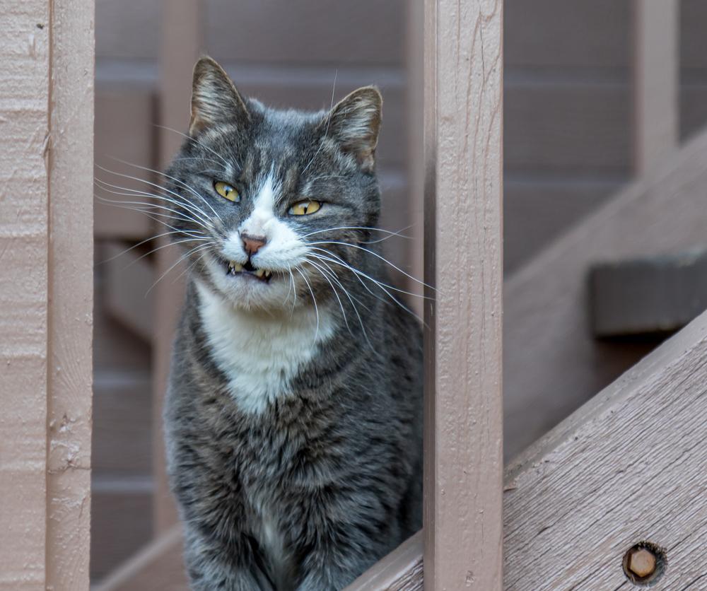 不敵な笑みを浮かべる猫。