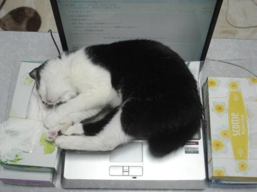 パソコンは定番の暖かポイント。