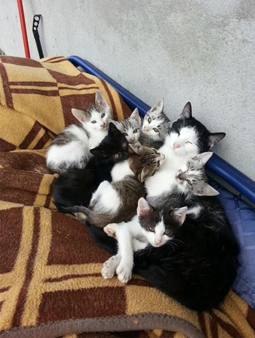 猫家族だんご!