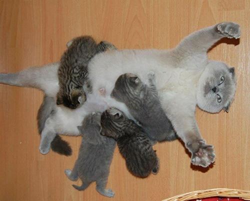 あっぱれな母猫!!