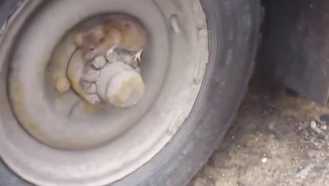 うまく隠れるネズミ。