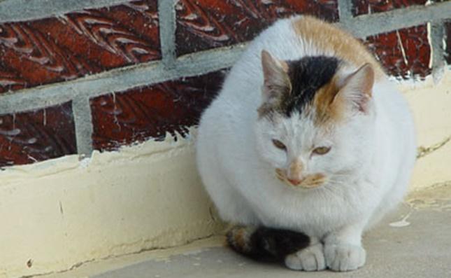 寒そうに丸まる野良猫さん。