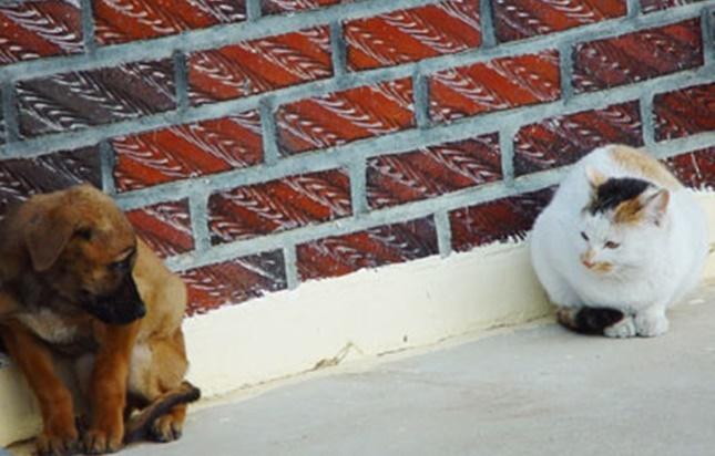 近くの犬と目が合う猫・・・