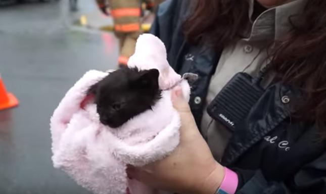 救出された子猫。