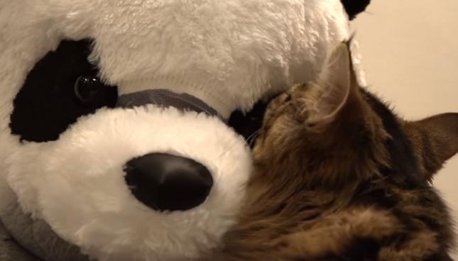 パンダに毛づくろい!