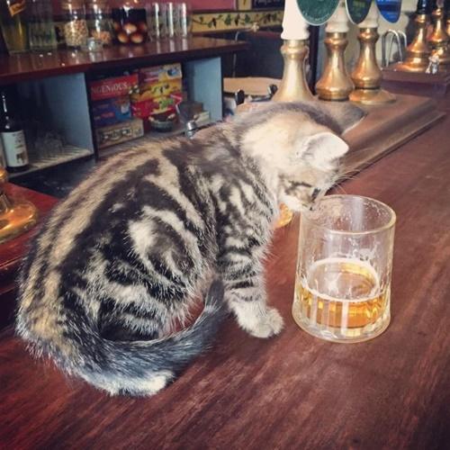 ビールの興味津々!?