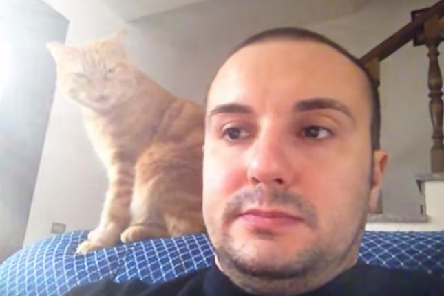 何かを訴える猫。