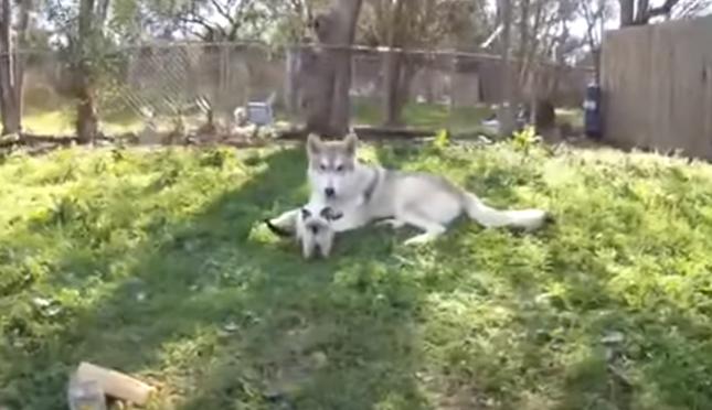 子猫と大きな犬。