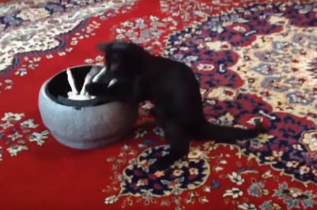 怖がりもせず夢中な子猫!