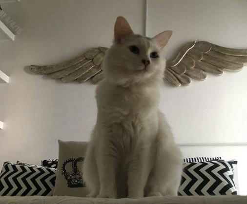 翼が生えた猫!