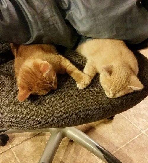 手をつないで眠る2匹の子猫