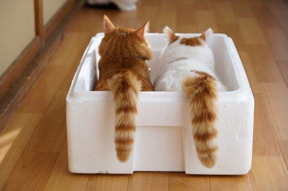 2匹の猫のしっぽがチョロリ