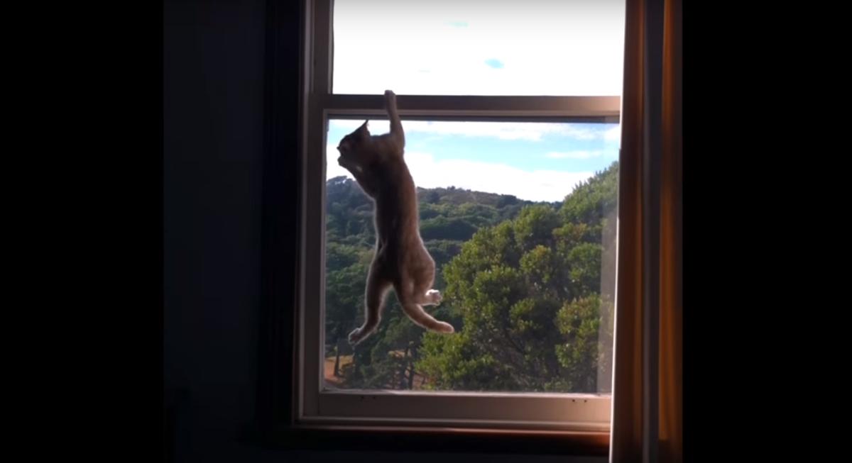 ミッションインポッシブル窓際懸垂な猫