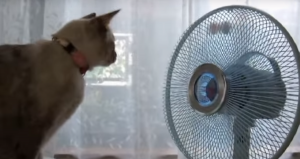 扇風機と猫