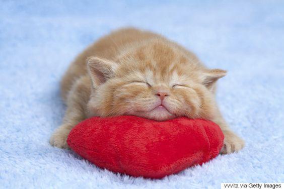 あご乗せ寝をする猫。