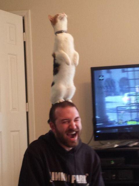 猫を頭に乗せて大喜びな飼い主さん。