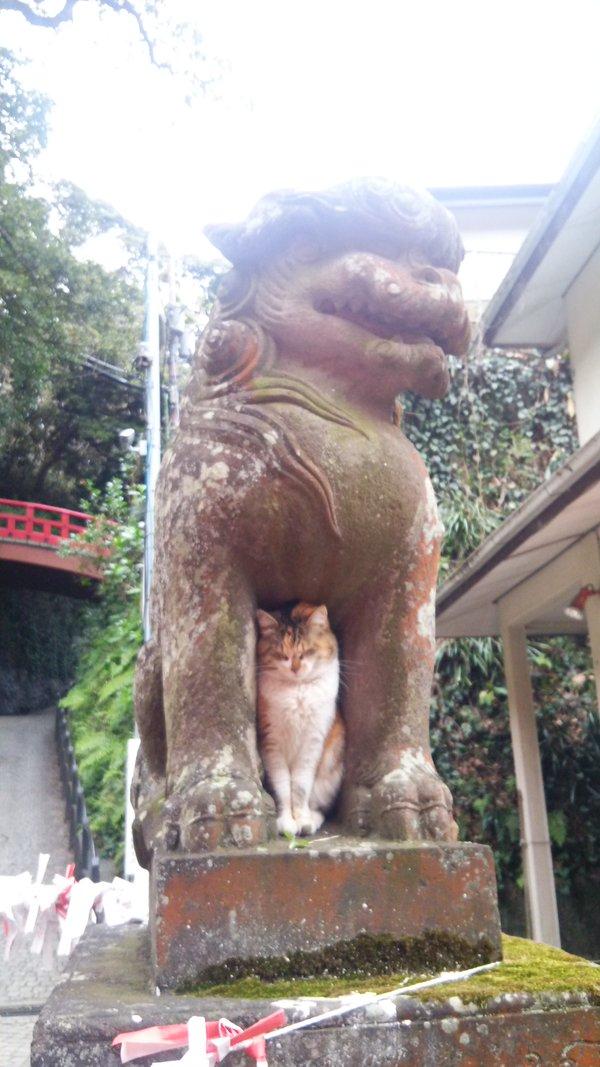 狛犬にジャストフィットする猫さん。