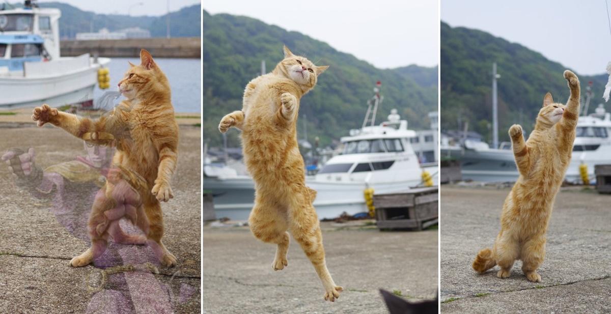強そうな達人風の猫