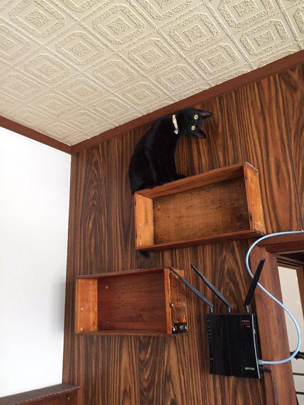 首をかしげる猫1