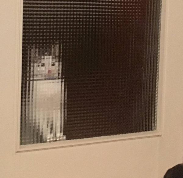 すりガラスピクセル化する猫。