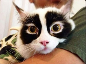 タヌキのようなパンダのような猫