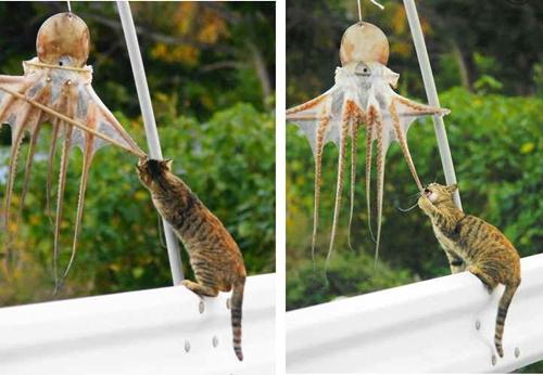イカ・・・ではなくタコハンターな猫