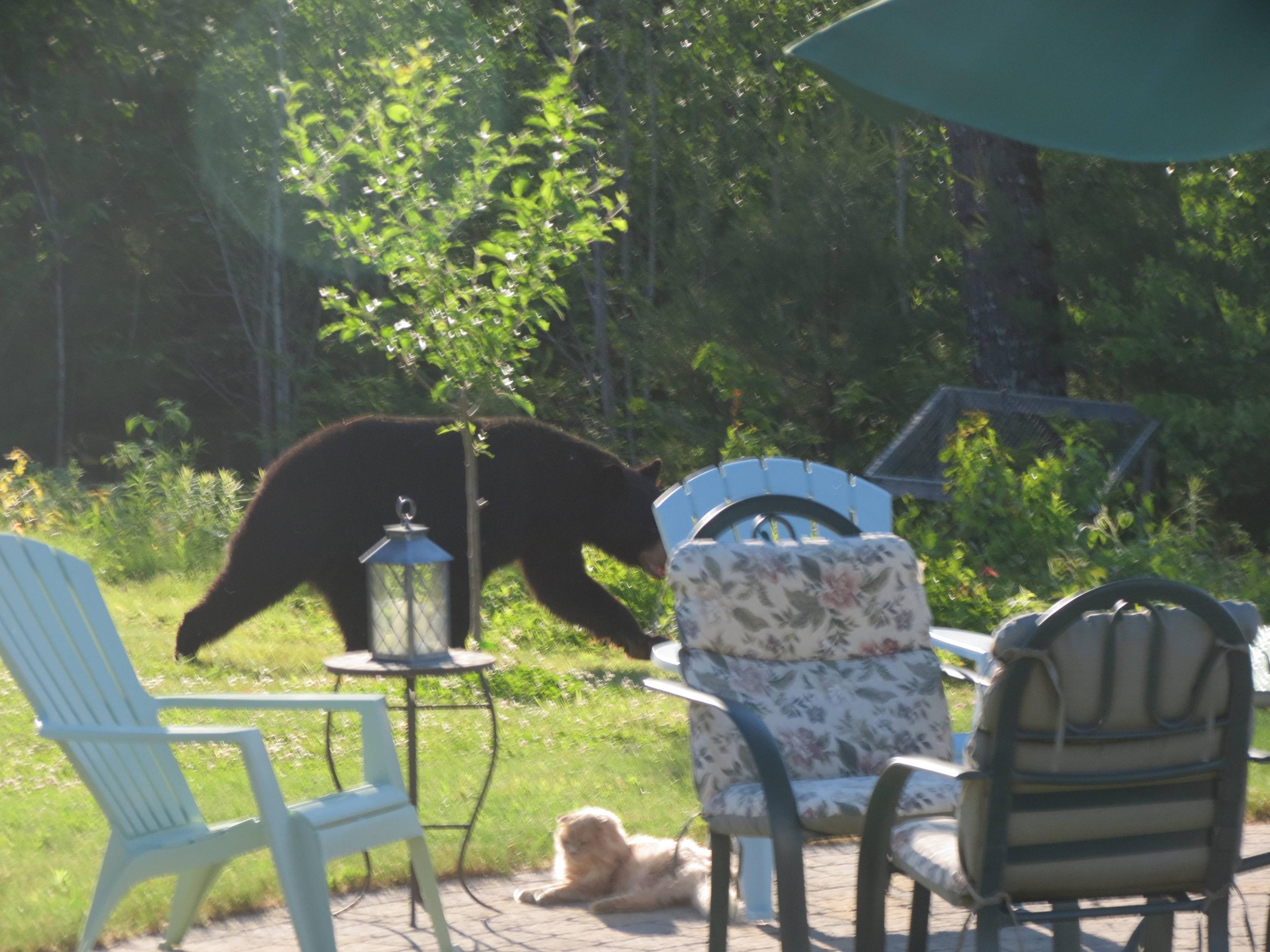 無関心すぎる熊と猫