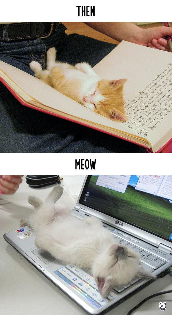 本で熟睡からPCで熟睡に。