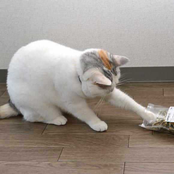 にぼしを狙う猫さん