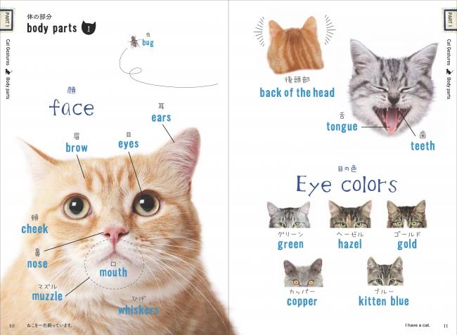 毛色や瞳の色もマニアックな猫単語!