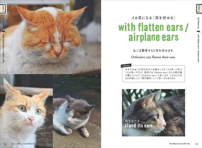 海外の猫文化も学べちゃう!