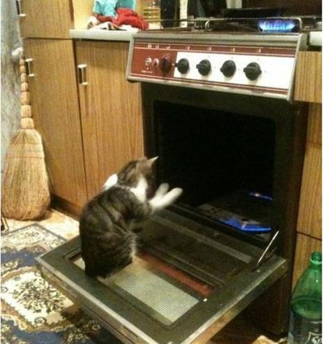 オーブンで人間のように暖を取る猫