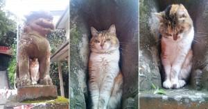 江島神社の狛犬にはまる猫。