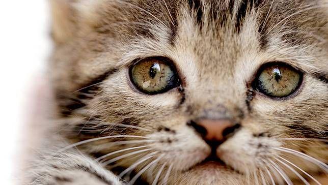 ひげで分かる猫の気持ち