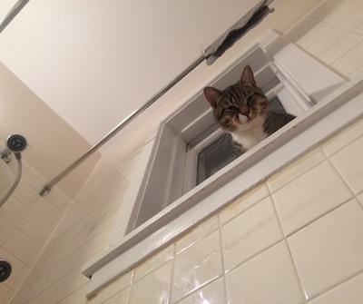 お風呂場にもベスポジ。