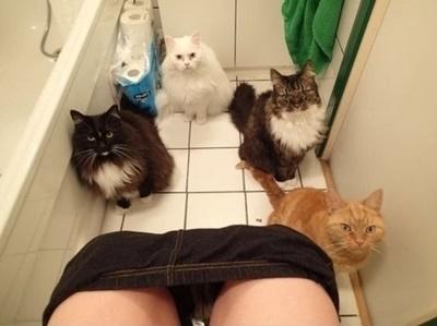 集中出来ないトイレ待ちも。