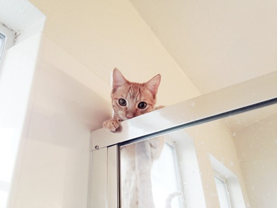 覗き子猫。